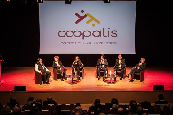 coopalis_1.jpg